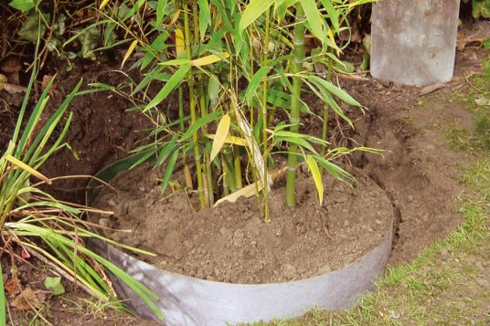 Plantex root barrier on bamboo plants